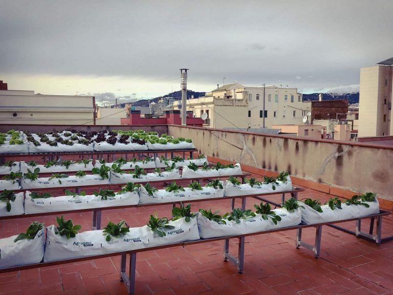 Zelenim fasadama protiv klimatskih promjena: Ko se uključi, grad mu daje cvijeće i saksije